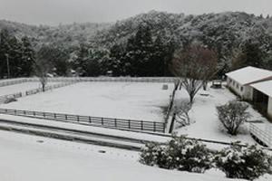 イベント:学園の雪