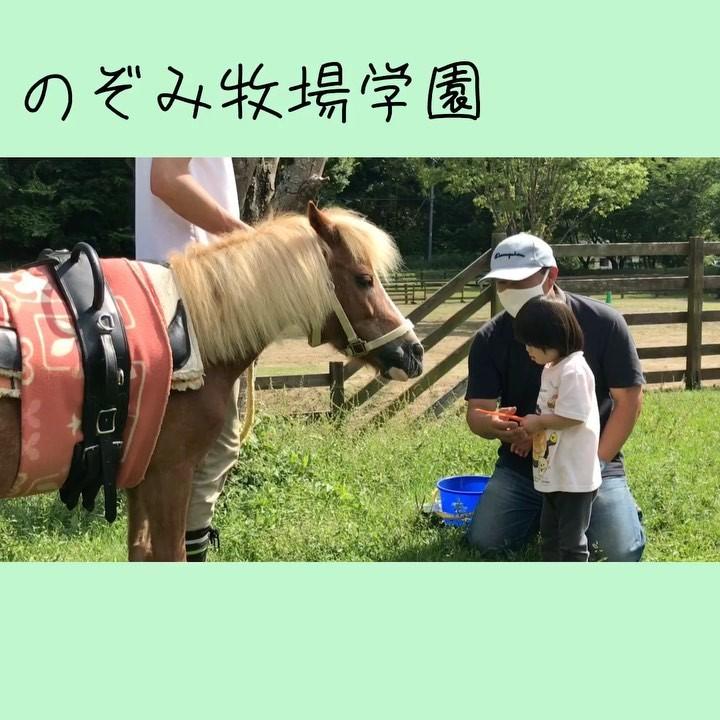乗馬セラピーの様子